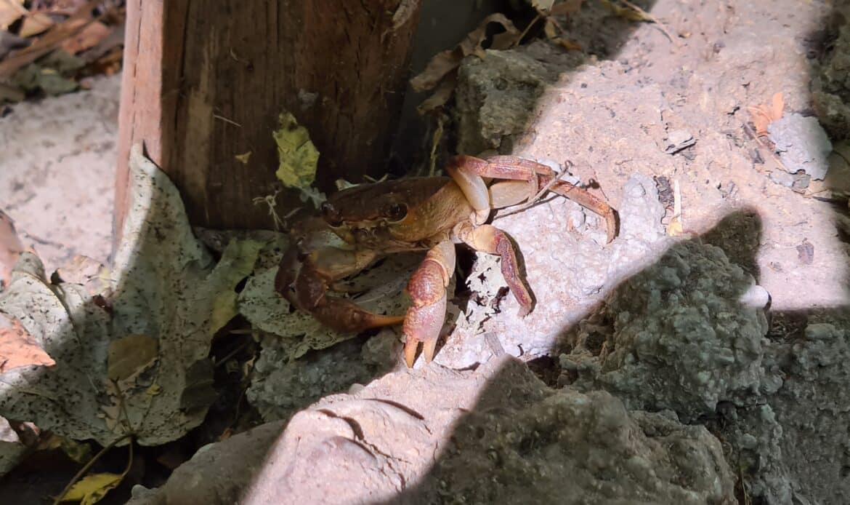 Eine Krabbe im Tal der Schmetterlinge
